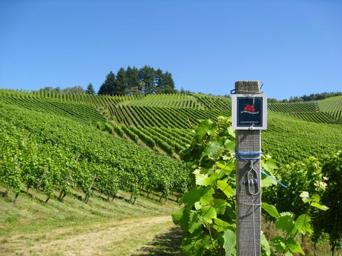 Wandern duch die Durbacher Weinreben