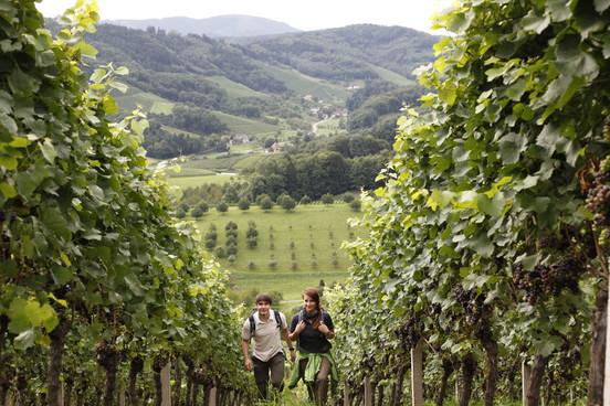 Weinwanderung im Renchtal